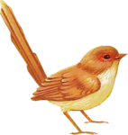 Bird02_dhedey.png
