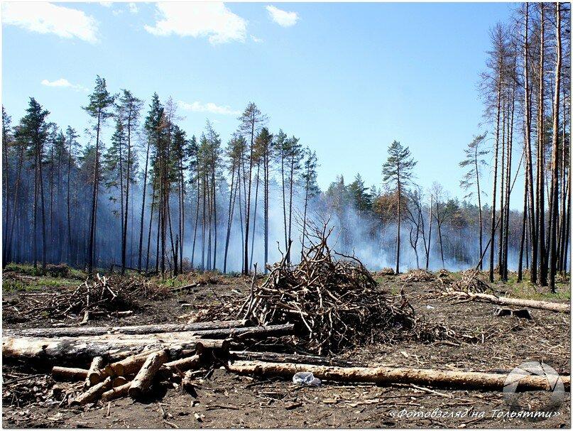 Вырубка сгоревшего леса Тольятти