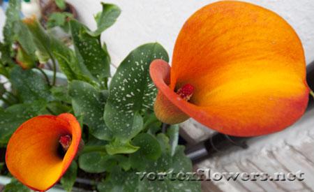 Фото живых цветов.