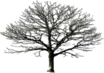 bare_tree_png_by_doloresdevelde-d5f61yl.png