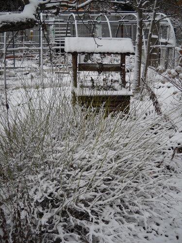 Сперли веточкой от куста. Сидело осень зиму и почти все лето 0_a6f67_14be2c1a_L