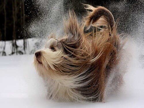 собака и снег фото