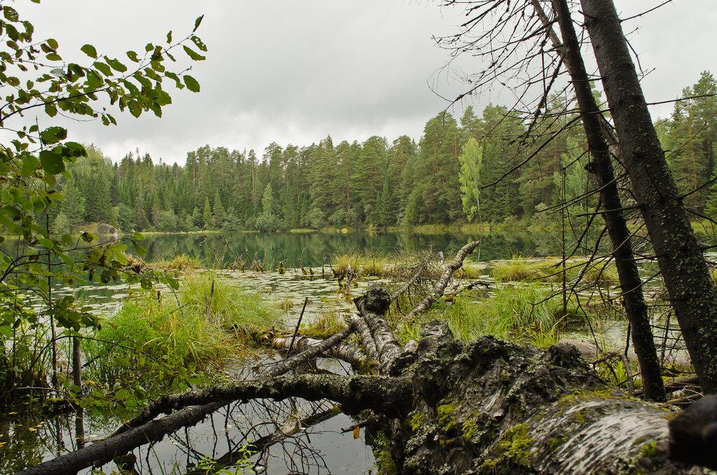 Фото 3. Пример фото с Nikon D5100 KIT 18-55. Затопленное дерево на озере Бездонное.
