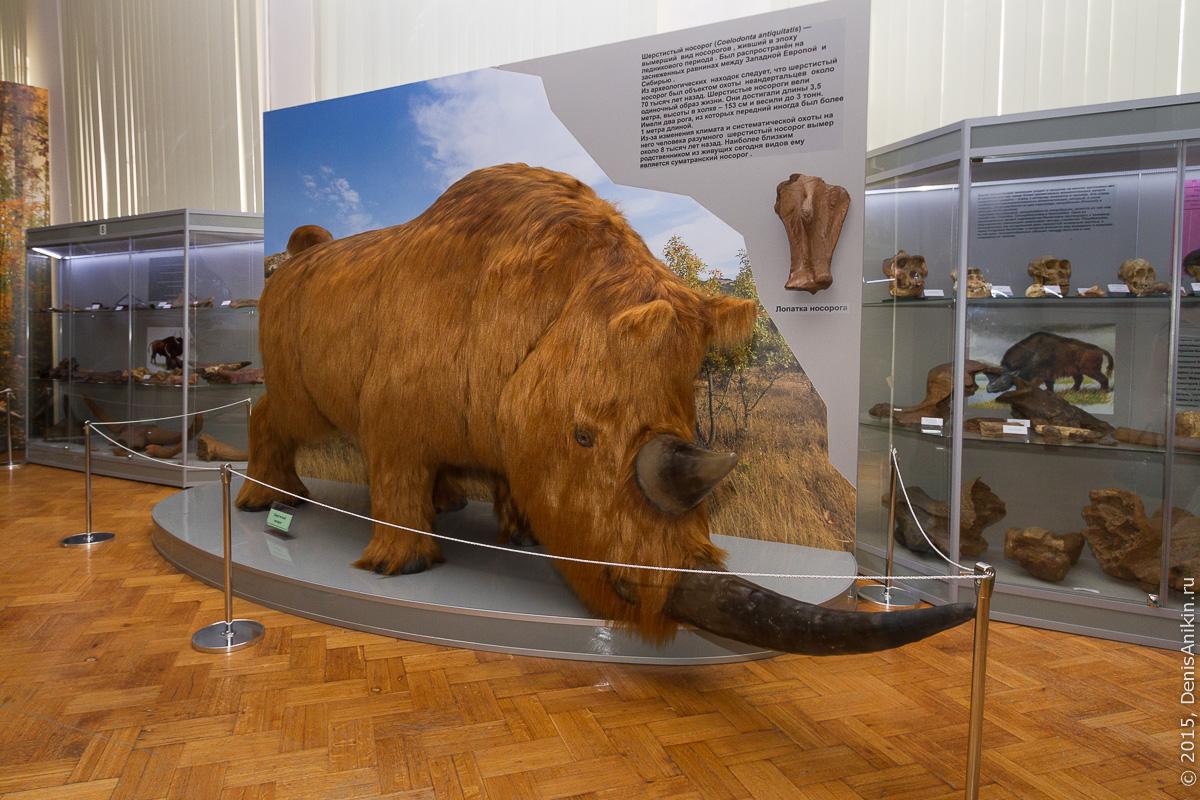Астраханский краеведческий музей 16