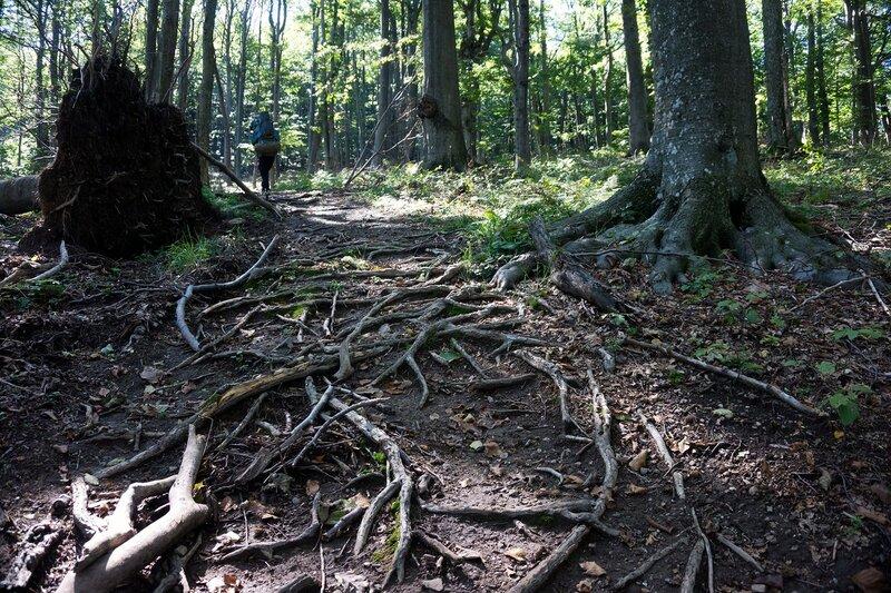 Ком - Емине, тропа по буковому лесу