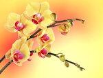 Orchids (4).jpg