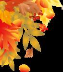 уголок - осень  листья.png
