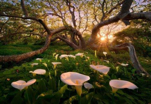 Красота, сотворенная природой, человеком, временем...