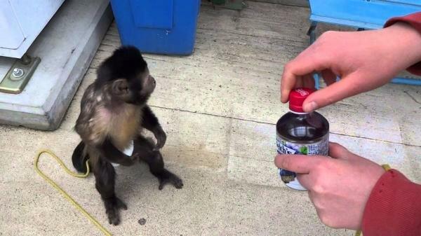 Секс опыты с обезьянами