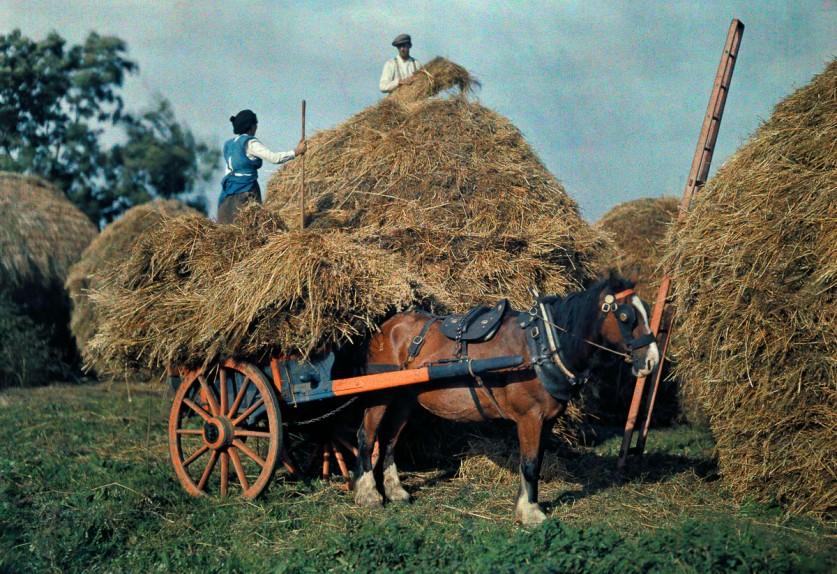 Фермеры и стога сена на ферме в графстве Корк.