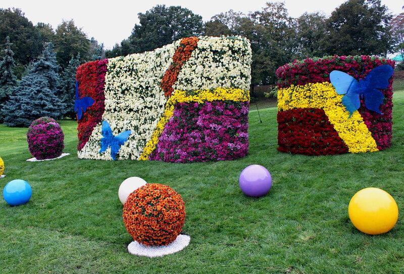 Выставка хризантем в Киеве