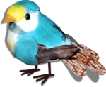 ditab bird2sh.png