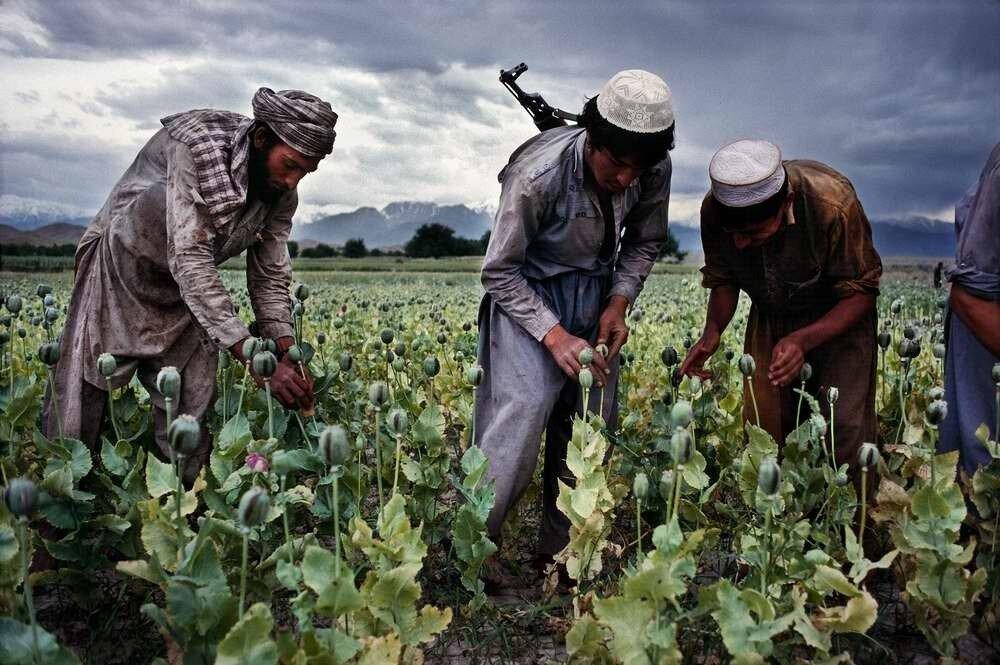 На полях афганщины созрел большой урожай ...