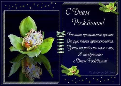 С днем рождения! Орхидея в подарок. фото картинка поздравление скачать