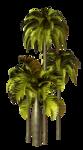 Palms  (26).png