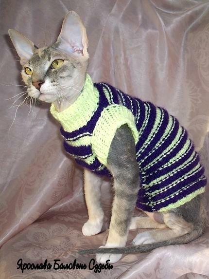 Все для кошек фото одежда своими руками