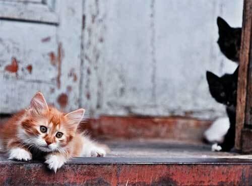 Коты и кошки в жизни общества