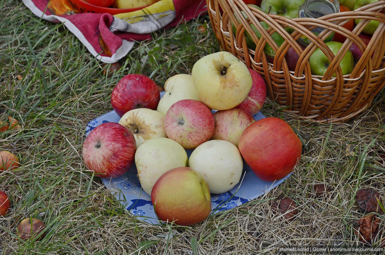 Яблочный Спас в Гомеле