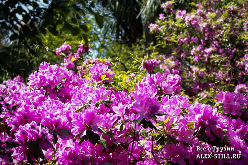Деревья цветут в ботаническом саду