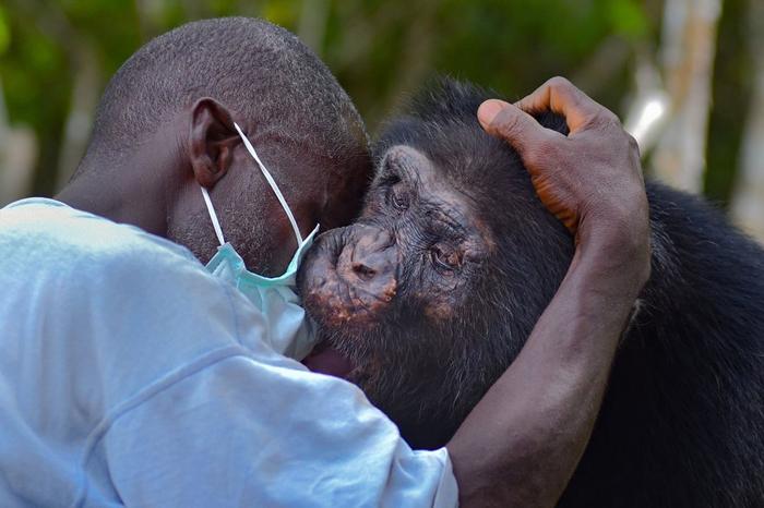 Фото история самого одинокого шимпанзе на свете