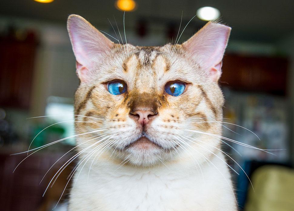 Andrew Marttila/REX/Shutterstock «Я пыталась написать СМС своему коту и сказать ему, что скучаю без