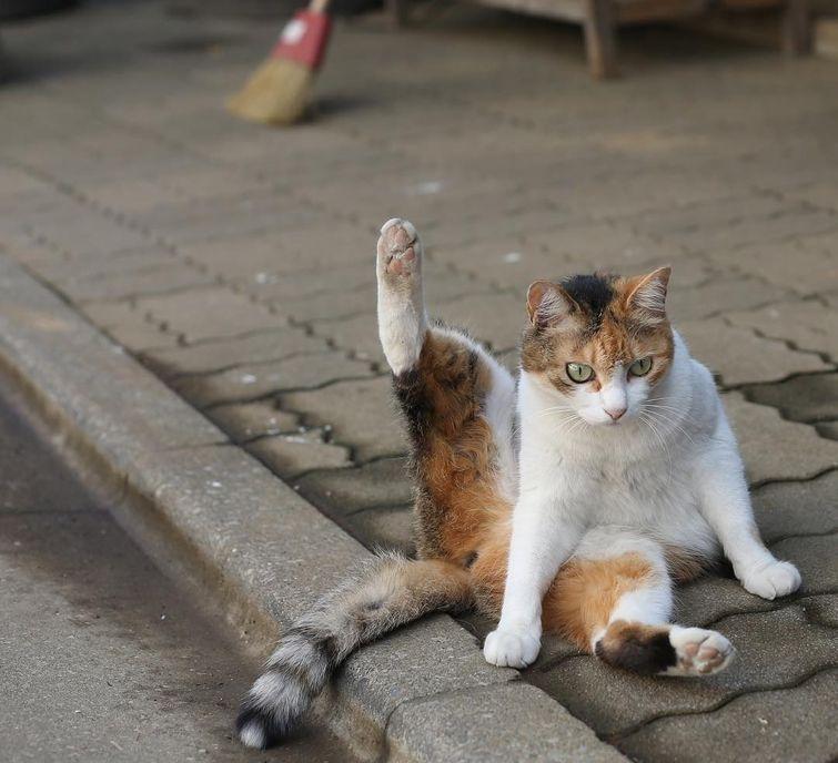 Фотографии бездомных котов Токио (16 фото)
