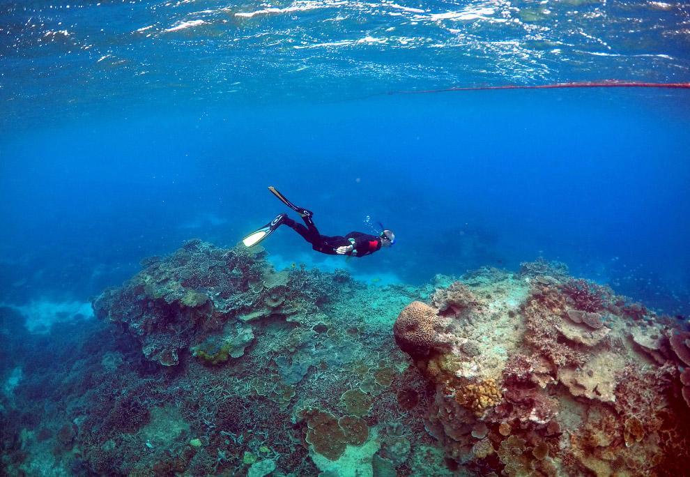10. На Большом барьерном рифе обитает около 1 500 видов морских рыб. Число же только массово вс
