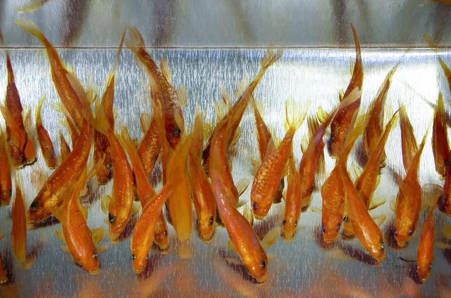 К тому же, это не единственные шедевры Фукахори, в которых оживают морские обитатели, помещённые не