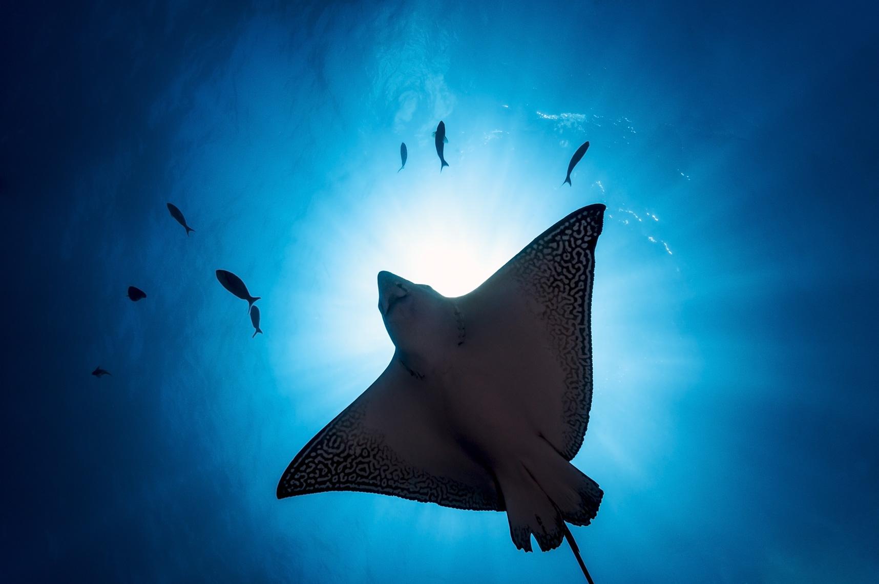 Подводные фотографии Тода Бретла (Todd Bretl) (29 фото)