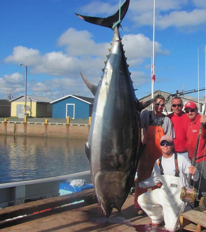 Голубой тунец, весящий 222 килограмма (цена 1,76$ млн.) — на 1-м месте Пьедестал чемпиона среди наиб
