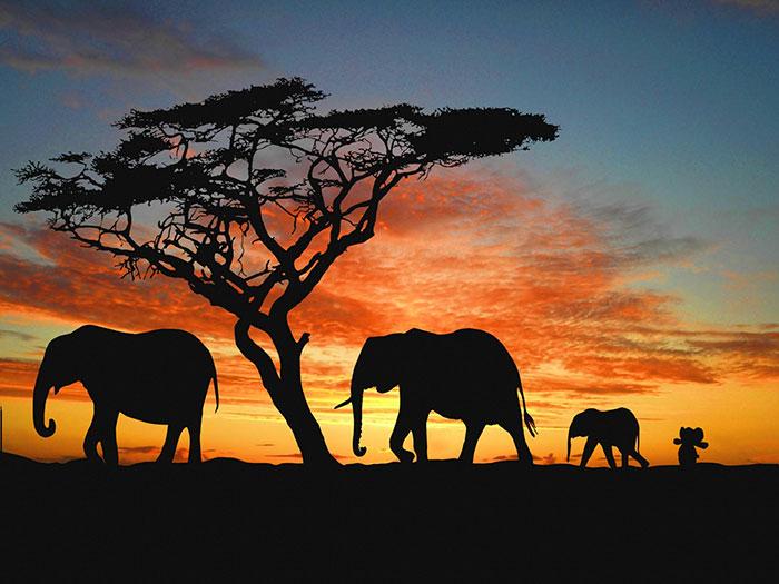 Он успел побывать в Африке.