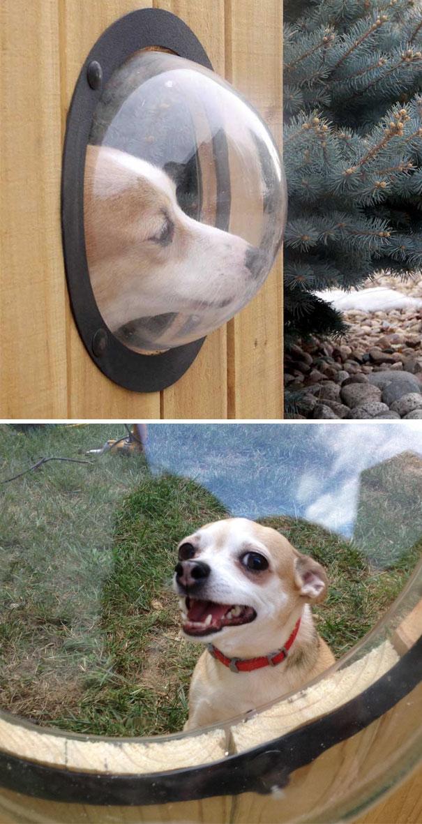 Собака, которая любит выглядывать на улицу, теперь имеет собственный «иллюминатор».