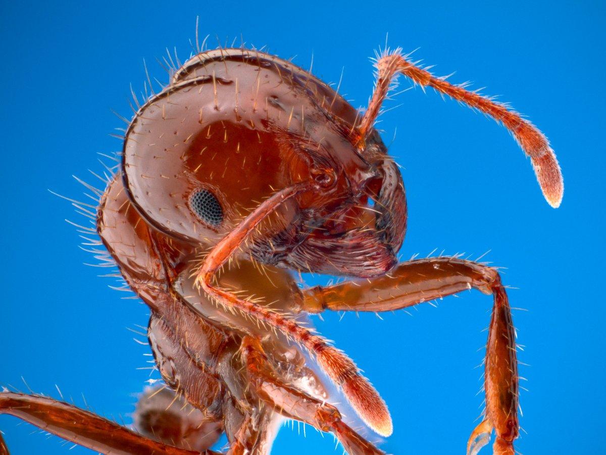 Энтомолог испытал на себе самые болезненные укусы насекомых и составил шкалу боли (10 фото)