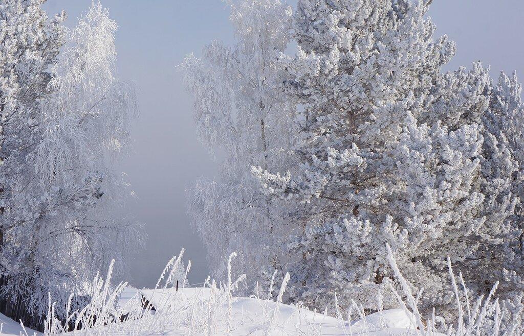 Снег и иней.jpg