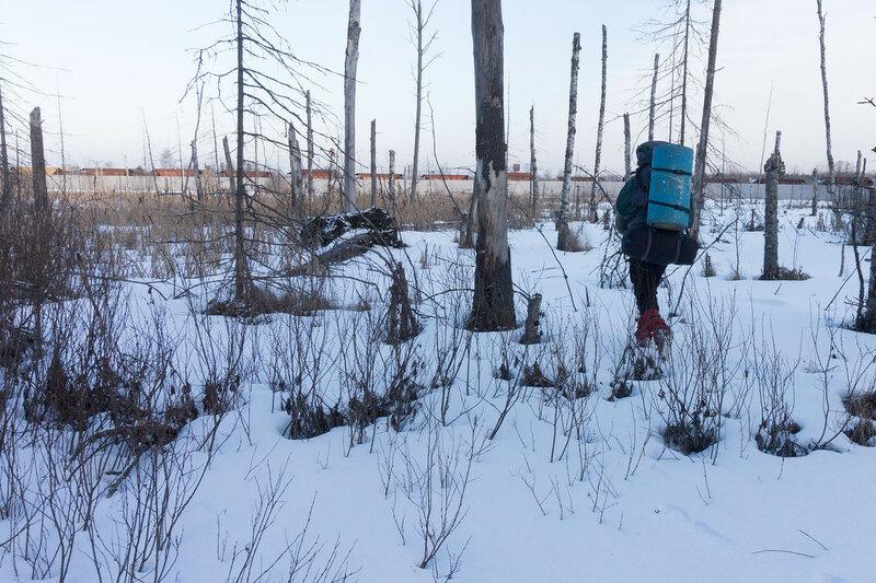 выход к станции Семрино из леса через болото зимой