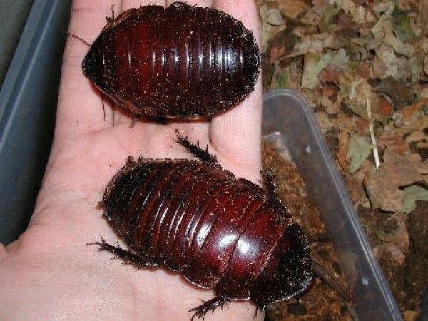 Гигантские жуки нашей планеты (7 фото)