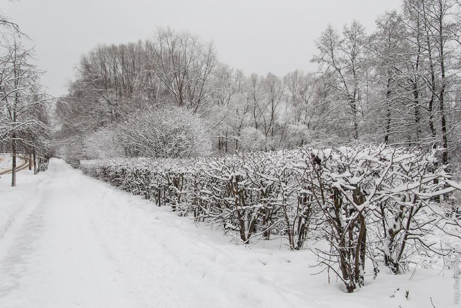 бессарабенко зимой