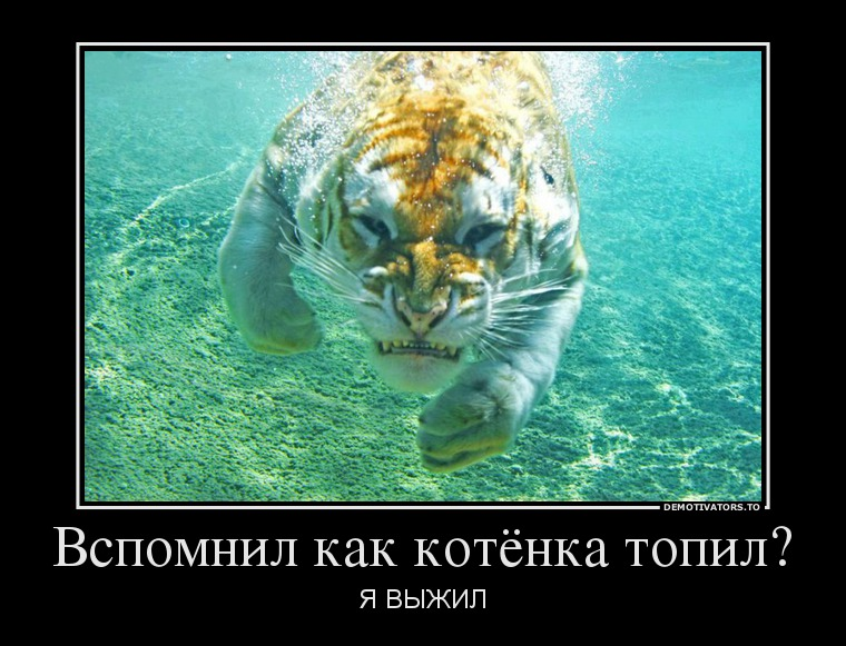 http://img-fotki.yandex.ru/get/9511/215140874.1b/0_c0d86_56d18f65_orig