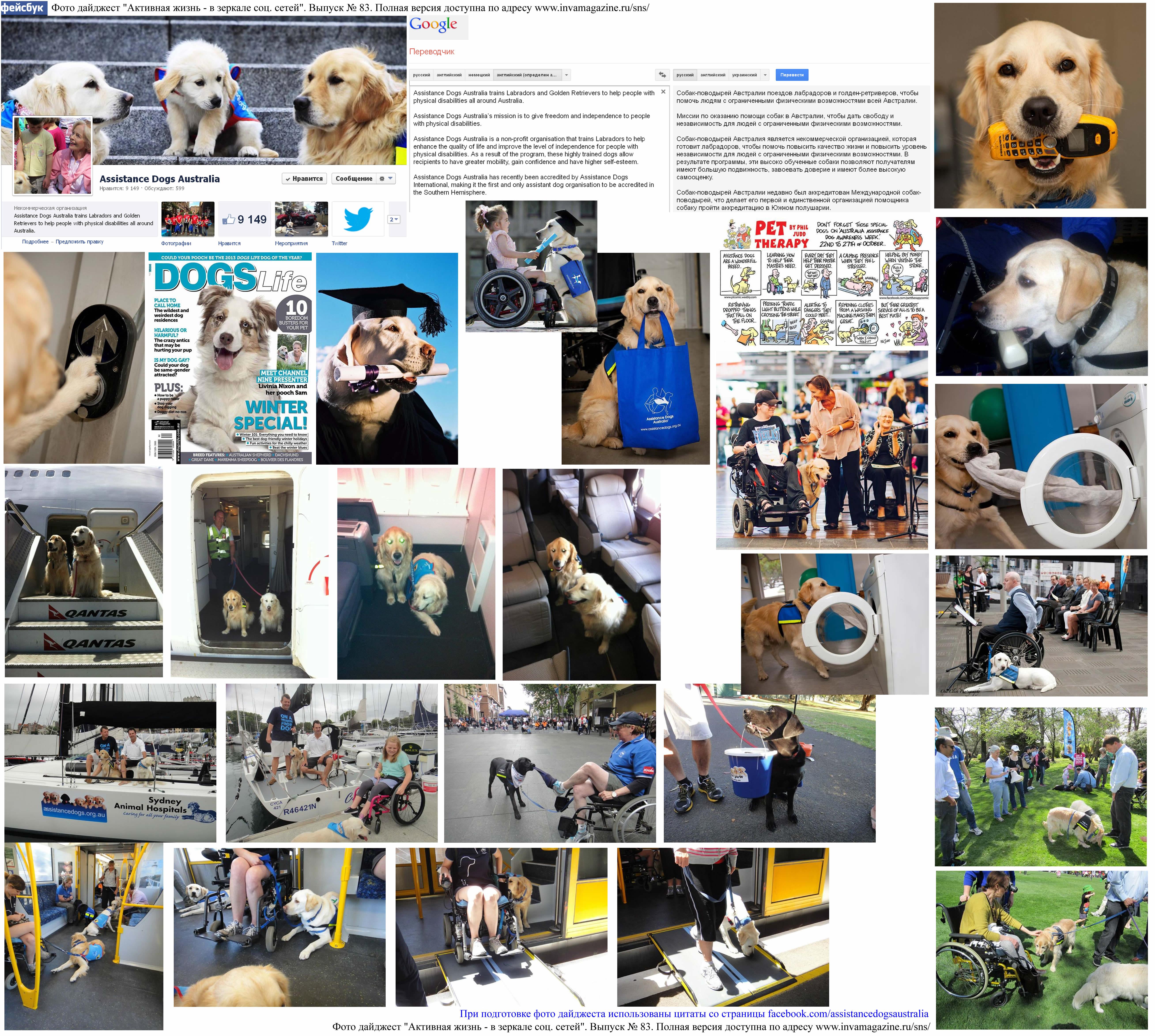 Фото дайджест страницы Assistance Dogs Australia