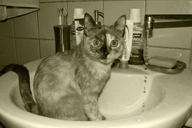 Лапы с мылом мыть?