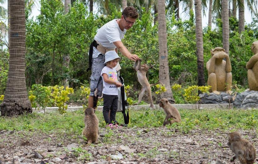 Остров обезьян / путешествие во Вьетнам / пора брать билеты