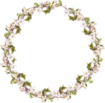 sekada_totheflowers_element(25).png