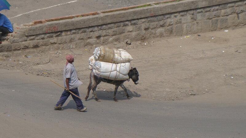Аддис-Абеба. Альтернативный транспорт