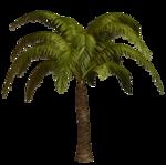 R11 - Palms - 2013 - 013.png