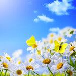Flowers (4).jpg