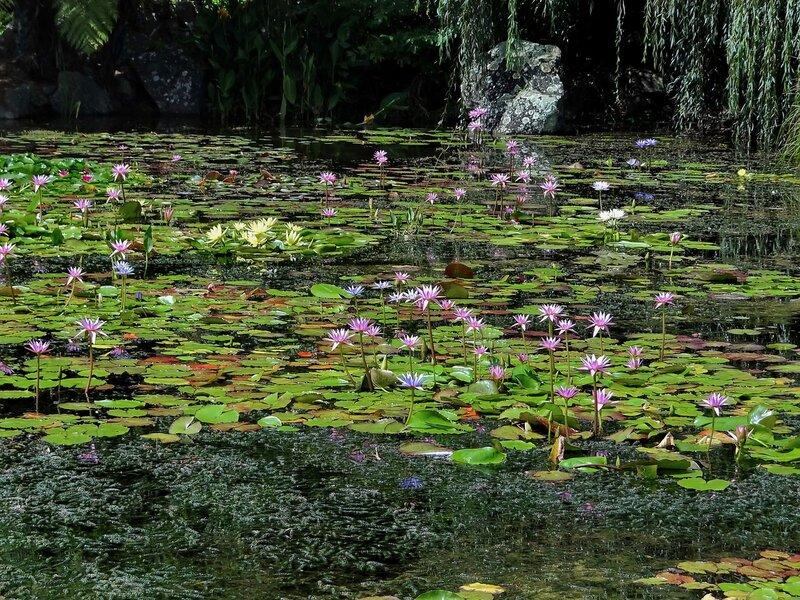 В водном раю...