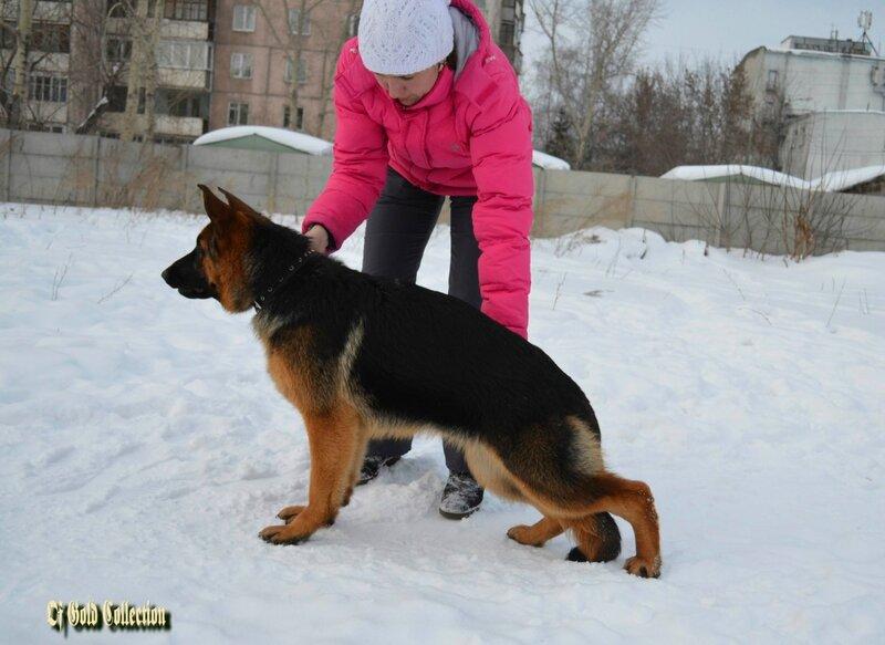 http://img-fotki.yandex.ru/get/9512/134559744.1a/0_bc9ae_14ca2e49_XL.jpg