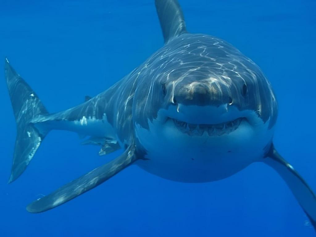 Встреча с белой акулой