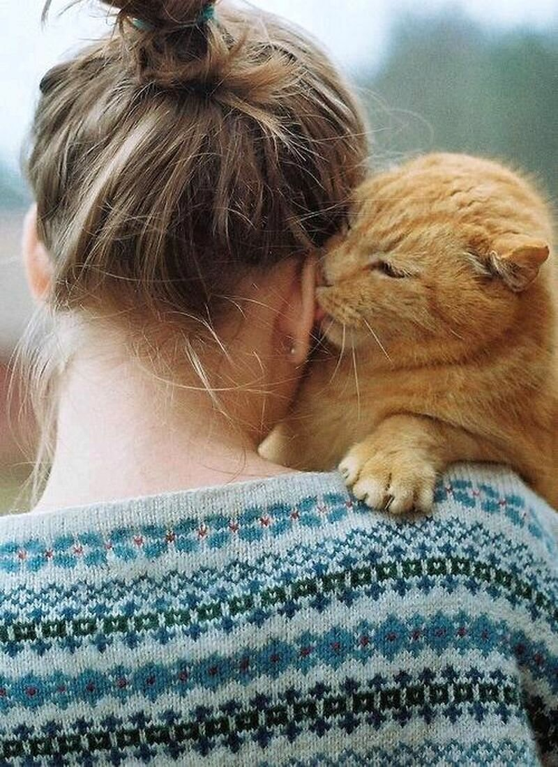 Кот лижет мне руки
