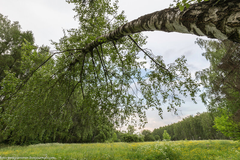 Парк в усадьбе Узкое